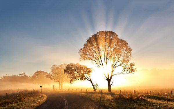 7019348-sunrise-morning-mist